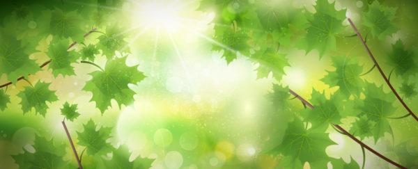 Atmosféra listnatého lesa zalitá sluncem