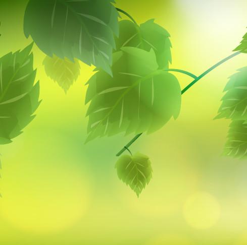 jarní motiv s listy a světlem